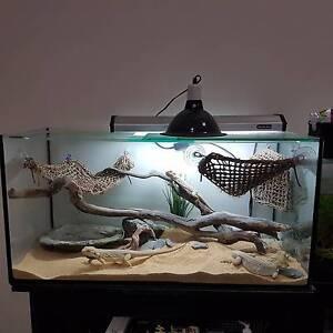 Lizard with 3ft Tank +stand+ extra goods Kewarra Beach Cairns City Preview
