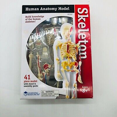 Learning Resources - Educational Insights Skeleton Anatomy Model 9.2