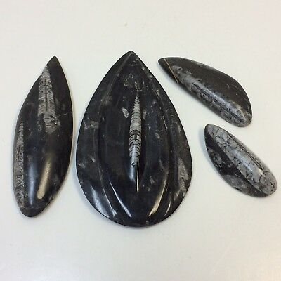 Lot of 4‼ Genuine Polished Orthoceras Fossils 415g • 400 Million Years Old‼