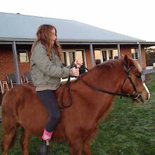 wanted quite gelding or mare Macclesfield Yarra Ranges Preview