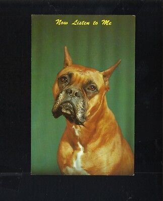 NOW LISTEN TO ME BOXER DOG EKTACHROME POSTCARD BY ALAN FELIX DEXTER PRESS