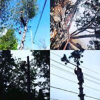 Fully insured tree care