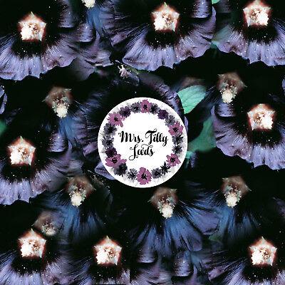 Stiefmütterchen Schweizer Riese Dunkelblau Deep Blue Samen Blumen mehrjährig