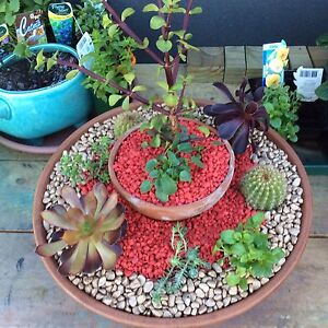 Decorative Potplants of Cacti, Succulents, Sedums and more .... Penna Sorell Area Preview