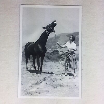 DRIFTWOOD Named Quarter Horse Stallion Postcard, used for sale  Shipping to Canada