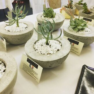 Succulents in concrete pots- perfect Xmas gift