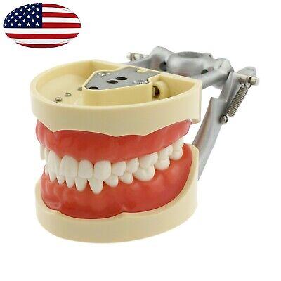 Kilgore Nissin 200 Style Dental Typodont Model 32 Pc Teeth Removable Practice Us