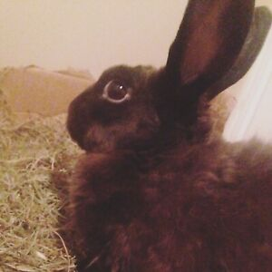 Bunny - free to loving home