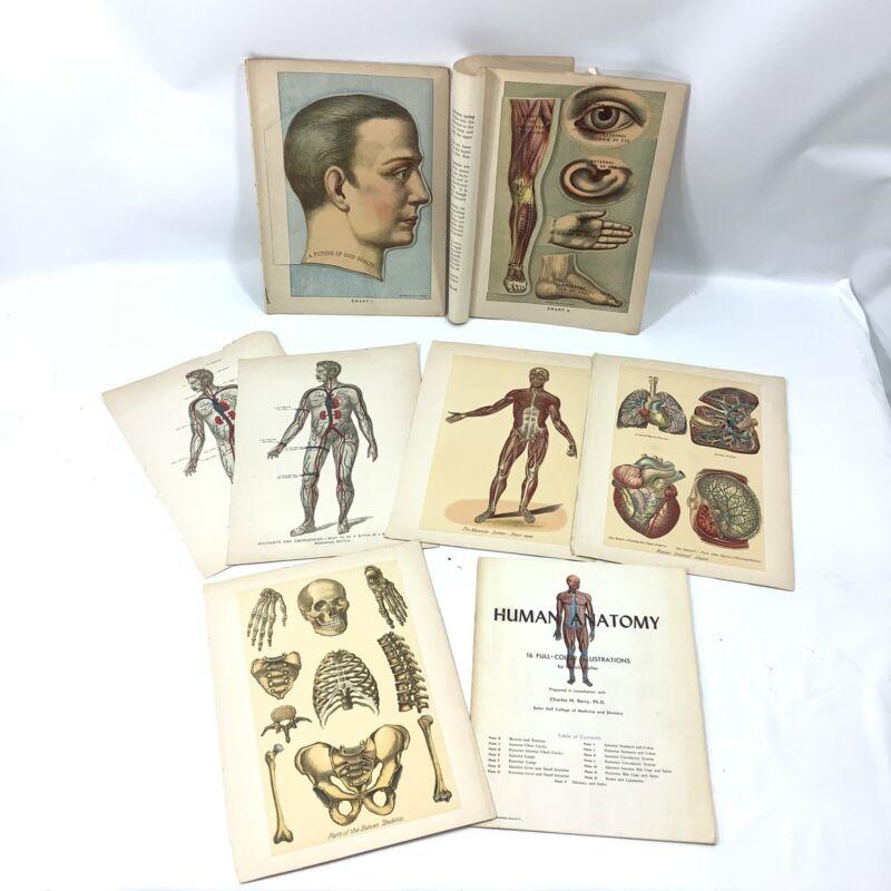 VICTORIAN LOT 1901 CUTOUT EPHEMERA DR HUMAN ANATOMY E J STANLEY SKELETON Medical