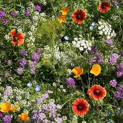 LOW GROWING WILDFLOWER SEED MIX - MIX OF ANNUAL & PERENNIAL WILD FLOWER GARDEN Annual Wildflower Seed Mix