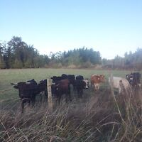 Looking for land to raise grass fed beef
