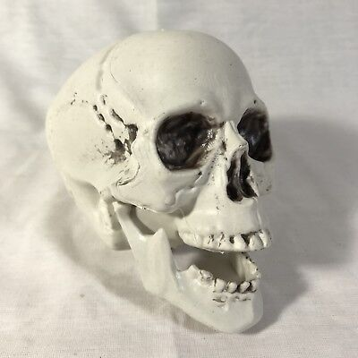Plastic Skull 3