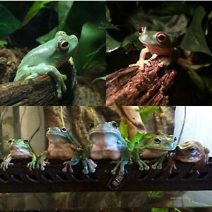 FROGS AND SNAKES FOR SALE Fyshwick South Canberra Preview