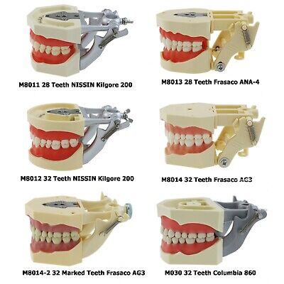 Dental Training Model Typodont 28 32 Teeth Columbia Nissin Kilgore Frasaco Fit