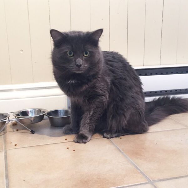 Chat donner chats chatons adopter laval rive nord for Meuble a donner montreal kijiji