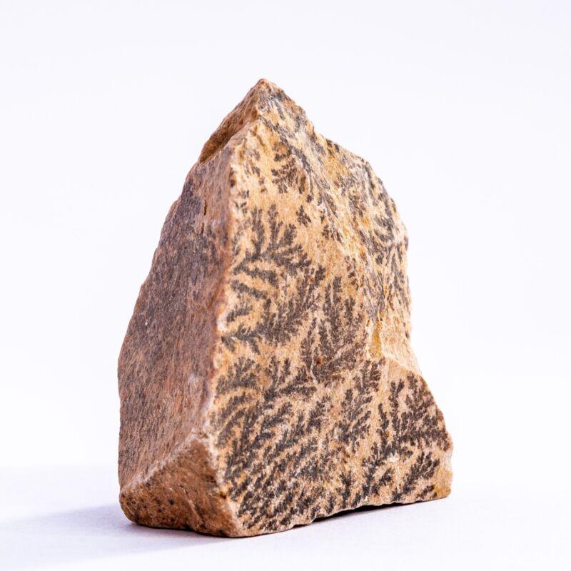 Mount Sinai Wonder stone burning bush!
