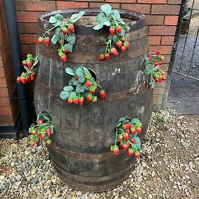 Cheeky Chicks Recycled Solid Oak Whisky Barrel Strawberry Plant Pot Planter