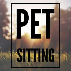 Professional Pet Sitter