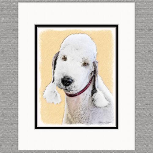 Bedlington Terrier Original Dog Art Print 8x10 Matted to 11x14