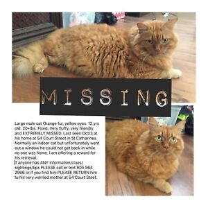 MISSING FROM COURT STREET ST CATHARINES