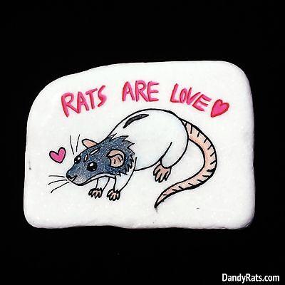 Dumbo Rat -