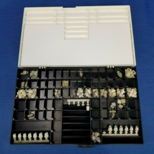 Major Dental Polycarbonate Temporary Crowns 127 pieces
