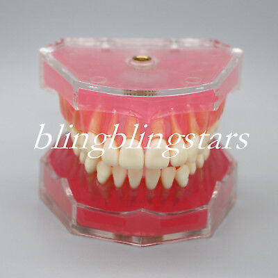Dental Teeth Model Study Teach Standard Model 28 Removable Teeth 4004 Orthodonti