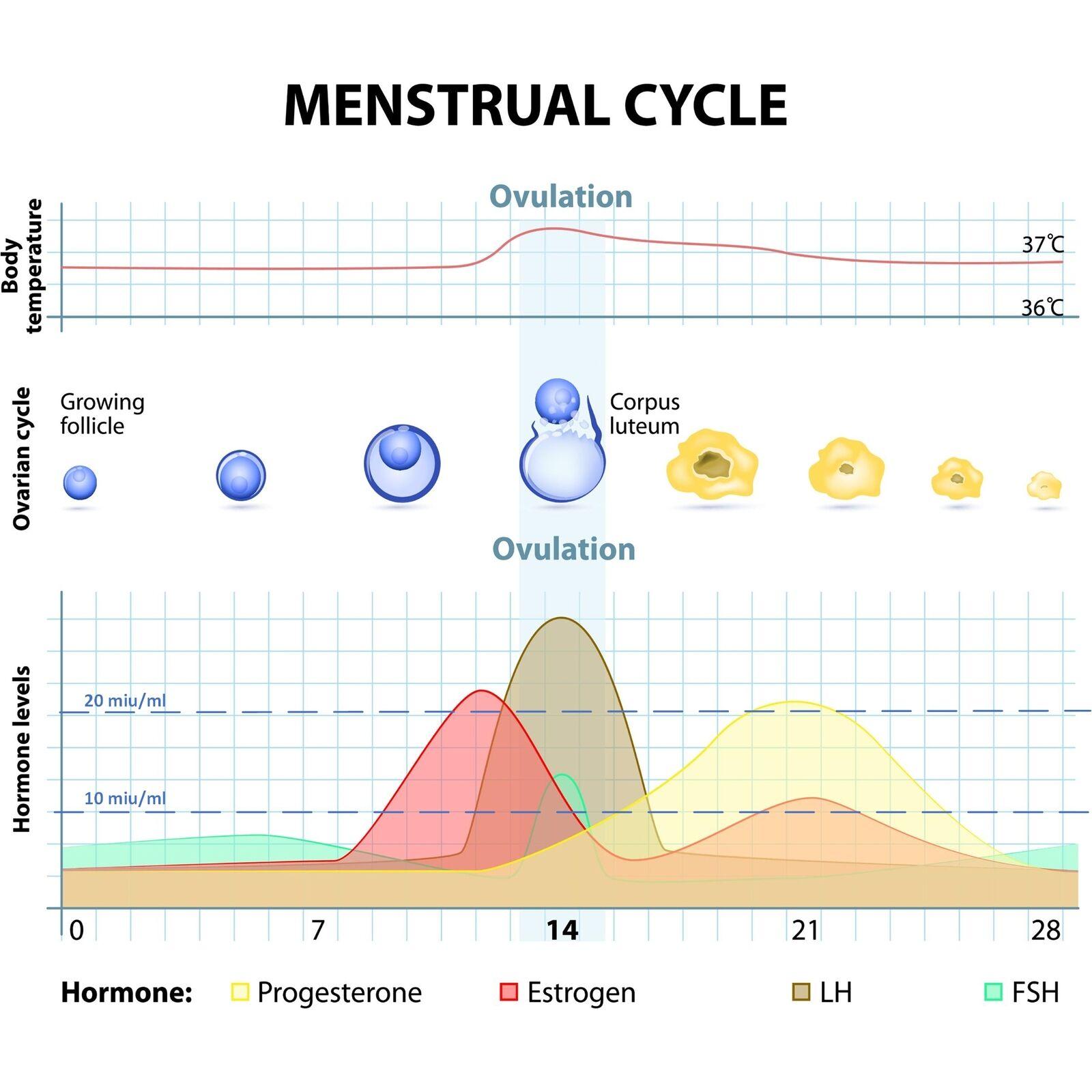 30 David Ovulationstest 10 miuml 5 Schwangerschaftstest - Streifen