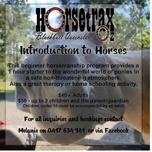 Horse Trax Oz Blackbutt Darling Downs Preview