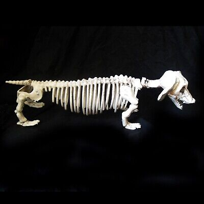 Funny Skeleton Dog Dachshund Haunted House Halloween Party Decoration Prop 21