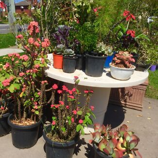 Plant and pots for sale all must go( 112 Walters road Blacktown) Blacktown Blacktown Area Preview