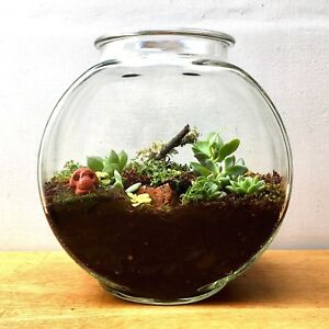 New Glass Terrarium W Lots Of Plants Moss Jasper Gems Crystal
