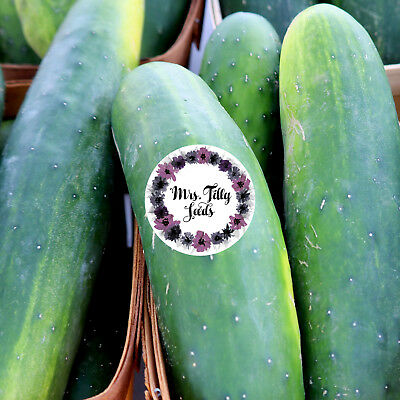 BAUERNGURKE PERFEKTION Gurkensamen robust ertragreich Freilandgurke 10 Samen