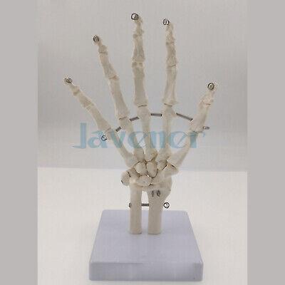 Life Size Human Hand Joint Bone Skeleton Anatomical Model Medical Anatomy