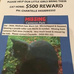 Lost  from Cameron Park black medium fluffy cat Cameron Park Lake Macquarie Area Preview