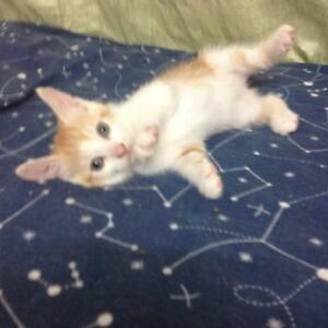 Free Kittens To Good Homes Kotara Newcastle Area Preview