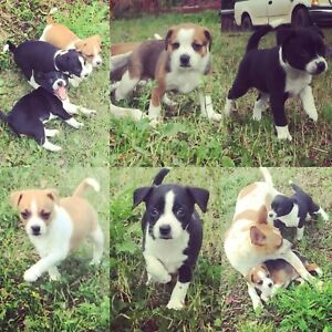 Cutest puppies ever!!