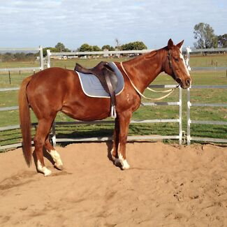 Safe, easy, relaxed horse, very responsive, nothing phases her. Wagga Wagga 2650 Wagga Wagga City Preview