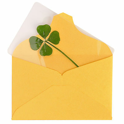 Real 4 Four Leaf Clover Irish Good Luck Charms Wedding Favors Gifts Coated Large