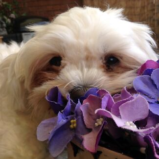 Pet sitter for spoiled dogs