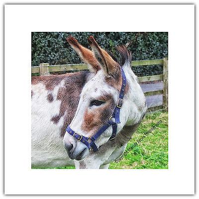 Donkey Pet Animal Farm Nature - Greetings Card Birthday / Blank Notelet for sale  United Kingdom