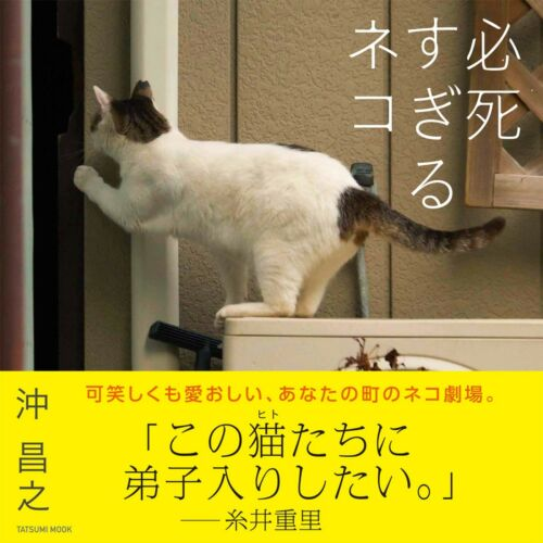 "Photo collection Cat desperately desperate ""Hisshisugiru-neko"" Tatsumi Mook"