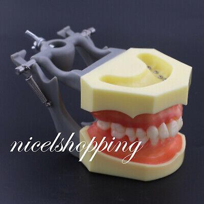 1 Pcs Dental Typodont Model 200 With Removable Teeth Kilgore Nissin Type Model