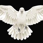 White Crow Trading Co