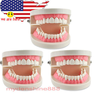 3pc Dental Teach Study Adult Standard Typodont Demonstration Teeth Tooth Model
