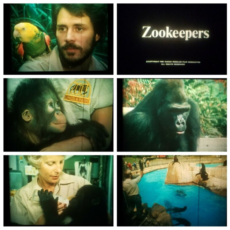 ZOOKEEPER 16mm LPP Color Film 1981 Lincoln Park Zoo Chicago