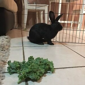 Beautiful rescue bunnies Blue Bay Wyong Area Preview
