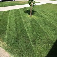 Lawn Care Bi-Weekly or Weekly