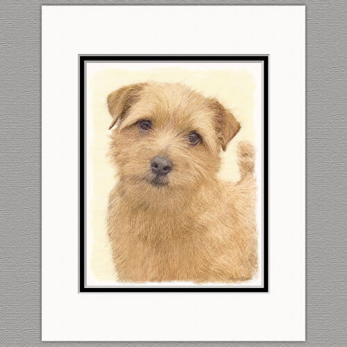 Norfolk Terrier Original Art Print 8x10 Matted to 11x14