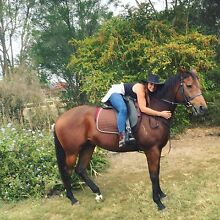 10 yr old Thoroughbred mare Tamborine Ipswich South Preview